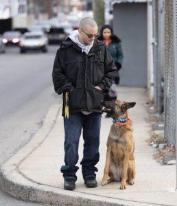 philadelphia's best dog trainer