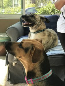 dog training philadelphia